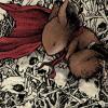 moonlettuce: (MouseGuard: Saxon w/bones)