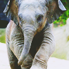 dragsonswode: (Baby Heffalump)
