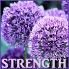 "nagasvoice: text=""strength"" next to spherical lavendar allium blooms (allium)"