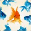 redxcrosse: (fish)