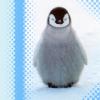 complicat: (penguin: 7timesfate)