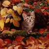 ithiliana: Cat in hollow log surrounded by fall leaves (Autumn Cat)