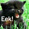 thedisappearingcat: (Eek!)
