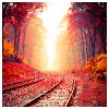 alee_grrl: Railroad tracks through an autumn forrest (autumn rails)