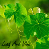leaf_and_vine: (Default)