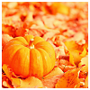 alee_grrl: miniature pumpkin surrounded by fall leaves (pumpkin leaves)