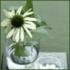 ext_12903: flower (flower)