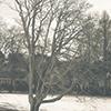 serpentine: (Nature - Bare tree in winter)