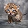 andrewducker: (Kitten Stalking)