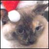 lavendertook: (Saki Elf, Santa Saki, Murasaki)