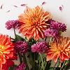 darwin: An array of multicoloured flowers. (Flowers!)