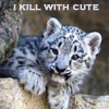 krazykitkat: (i kill with cute (snow leopard))