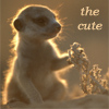 krazykitkat: (the cute (meerkat))