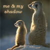 krazykitkat: (me and my shadow (meerkats))