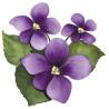 sofiaviolet: drawing of three violets and three leaves (violet)