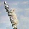 genprompt_bingo: A Picture of Kitten Kong, from the Goodies, knocking over the Post Office Tower (kittenkong)