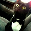 rustydragonfly: Photo of a black cat wearing a tux/bowtie collar (tuxedo cat)