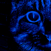 rustydragonfly: Closeup photo of a cat, edited to be blue (blue cat)