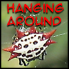 feng_shui_house: Turkey Spider hanging around (Hanging  around)