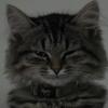 umadoshi: (kittens - Claudia - unimpressed)