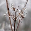 umadoshi: (ice on branch (shadow_images))