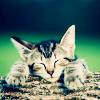 pixiesticks: (cat) (Default)