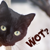karriezai: (cat)