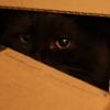 umadoshi: (kittens - Jinksy - peer)