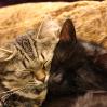 umadoshi: (kittens - snuzzle)