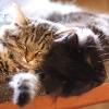 umadoshi: (kittens - sleeping)