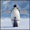 kate_nepveu: adult and baby penguin holding wings out to side (whee!)