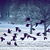 lindevi: (crows)