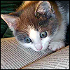 kate_nepveu: wide-eyed kitten looking at open book (I can't believe I just read that)