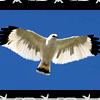 aisuyoukai: (White Hawk)