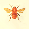 digging_up_bones: (Bees)