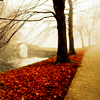 hilarytamar: trees with fallen red leaves beside a path and a stone bridge in the background (posts--a bridge by trees and the river)