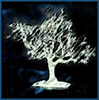 branchandroot: sumie drawing of tree (sumie oak)