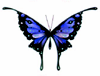 branchandroot: blue butterfly (butterfly blue)