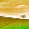 branchandroot: one tree in an open field (calm solitary tree)