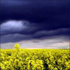 branchandroot: dark clouds over a sunlit field (sunlit and dark clouds)