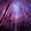 dchan: Photo of trees at night (woods at night)