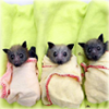 feather_qwill: ((bats in a row))
