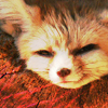 branchandroot: adorable fennec sleeping (cute sleepy fennec)