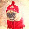 m_ravensblood: (Holiday Pug)