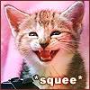 shelby_danvers: A very happy kitten (SqueeKitten)