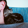 recessional: a small kitten is curled up on the shoulder and against the neck of a human (personal; i am comfy g'way)
