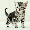 skieswideopen: A grey tabby kitten (Kitten)