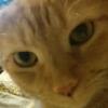 zocyt: (kitty)
