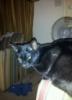 kiranovember: photo of my recently deceased cat Jellybean (Default)