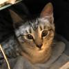 owlmoose: (cats - tori carrier)